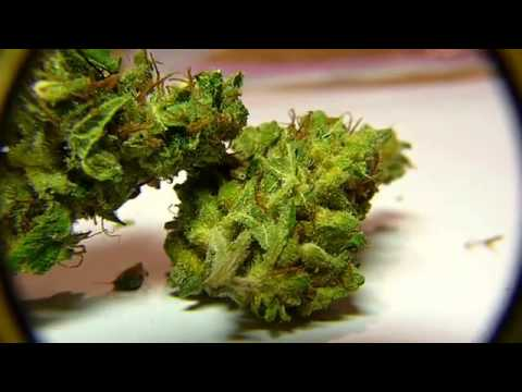 weed close up in hd somango swiss youtube. Black Bedroom Furniture Sets. Home Design Ideas