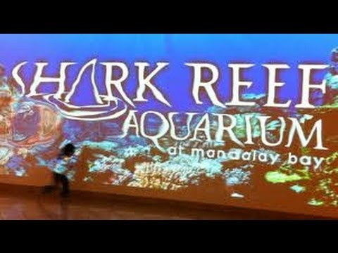 The Shark Reef Aquarium @ Mandalay Bay Las Vegas - BBC Interview & Review