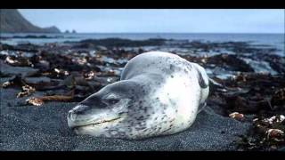 Top 50 Of The Most Dangerous Animals