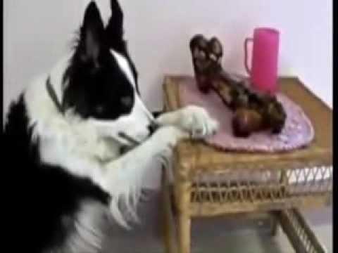 Dog praying before eating perros rezando antes de comer