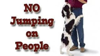 'How To' Teach Your Dog Not To Jump Up On People