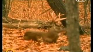 Neskrotná príroda - Yellowstone