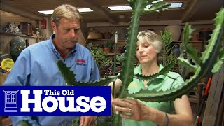 How To Choose And Care For Succulents This Old House