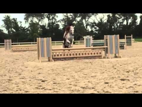 Wise Investment - 2000 Grey TB Mare For Sale - Over Fences