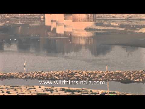 Yamuna :  one of the most polluted river in the world