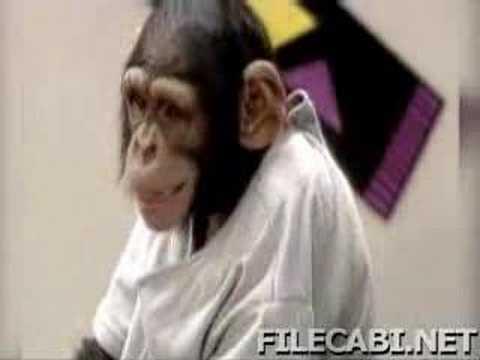kissing monkeys(very funny),