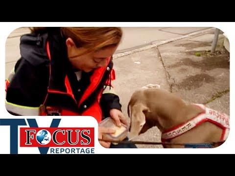 Sherlock Nase | Rettungshunde auf frischer Fährte - Focus TV Reportage