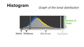 Your Camera's Histogram: Explained