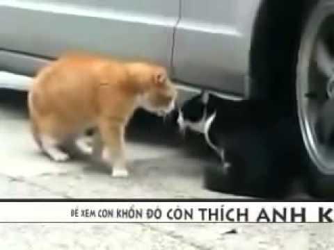 Video Clip Đánh ghen cực vui Video clip hài Vui nhộn Hóm hỉnh Cười vui Đặc sắc, Mèo đánh gen