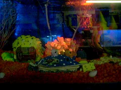 Best fish tank ever youtube for Google fish tank mrdoob
