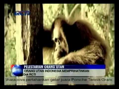 Peringatan Hari Bumi (April 29, 2013) - RCTI