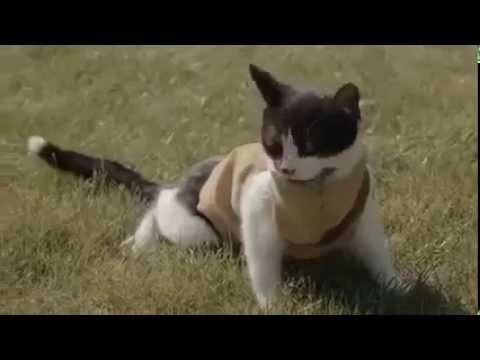 Mèo chống Zombie - Katzen gegen Zombies