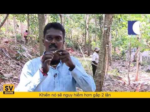 Truy Tìm Rắn Hổ Mang Chúa Khổng Lồ Ấn Độ Cùng Vua Rắn   Vietsub #4✔   YouTube