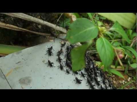 Estranha vida de inseto.