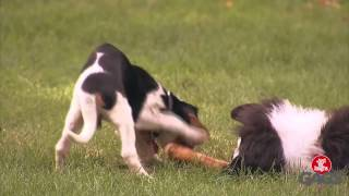 Perro de peluche ataca a perros reales