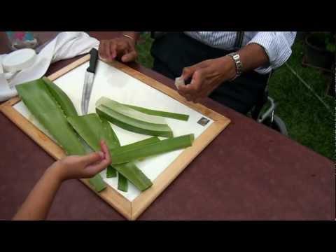 How to make Aloe Vera gel?