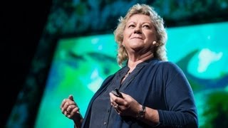 Ted Talks: Denise Herzing: Could We Speak the Language of Dolphins?