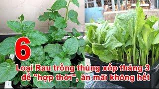 """6 Loại Rau trồng thùng xốp tháng 3 để """"hợp thời"""", ăn mãi không hết"""