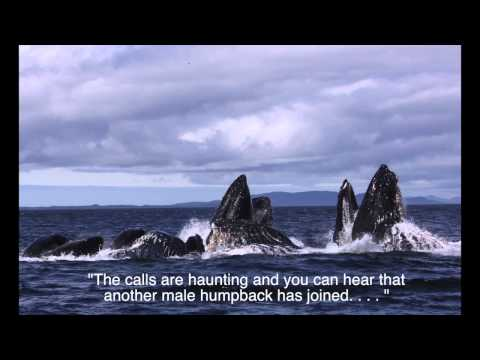 Whale song 3