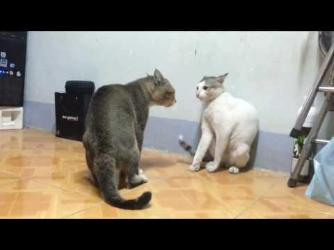 Xem 2 Em Mèo Thượng Đài