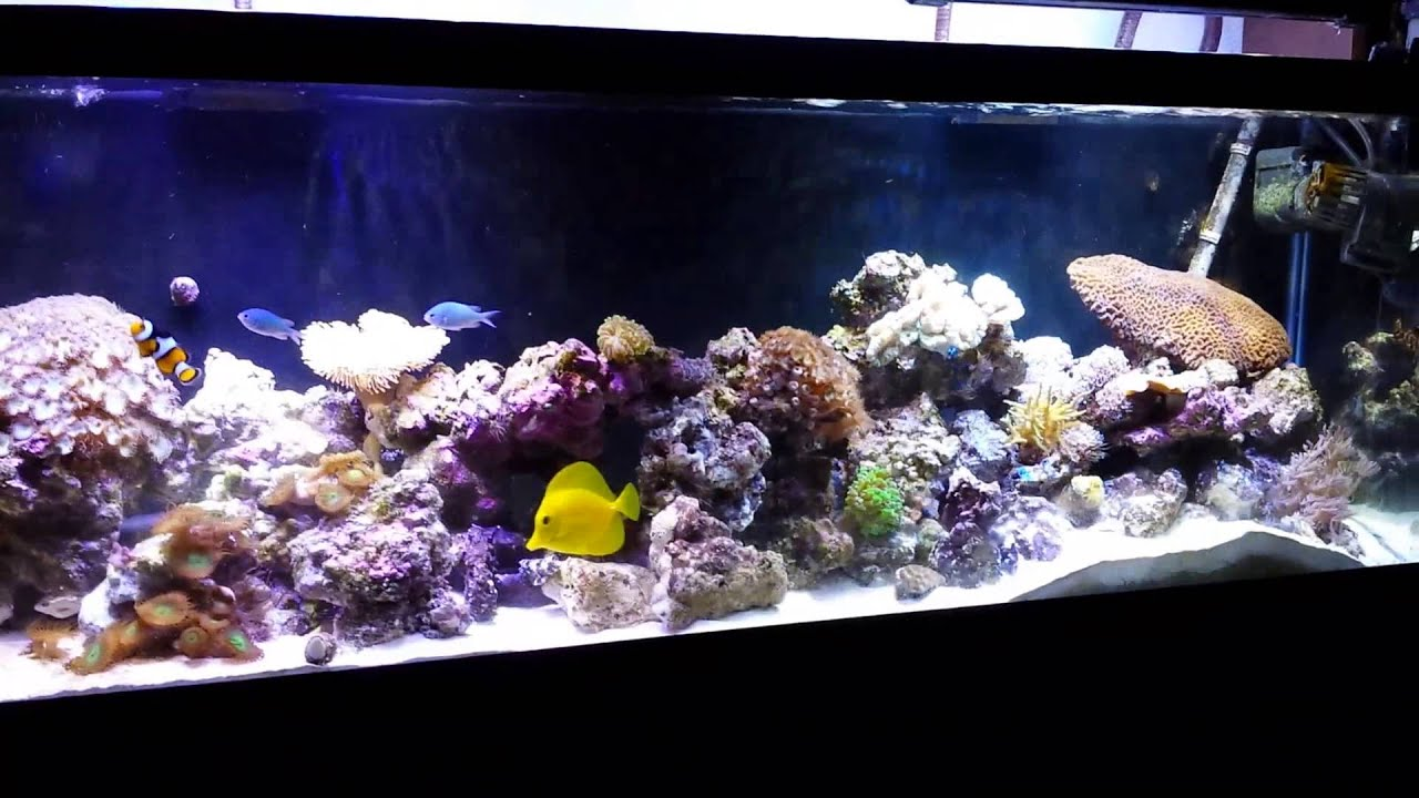 ... reef aquarium update 2. July 15, 2012 YouTube 2017 - Fish Tank