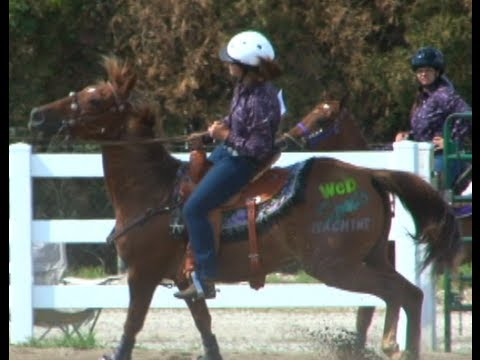 4H horse and pony 2013 | Delaware County | Web Sports Machine