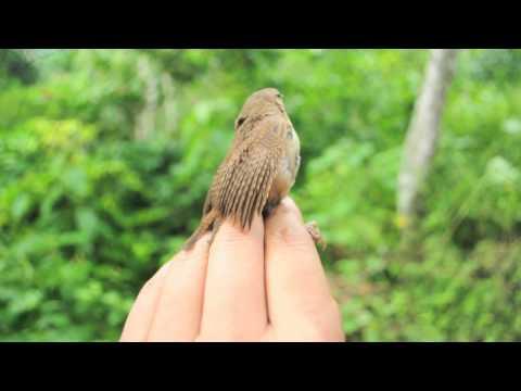 Venezuela paraiso de aves demo 2