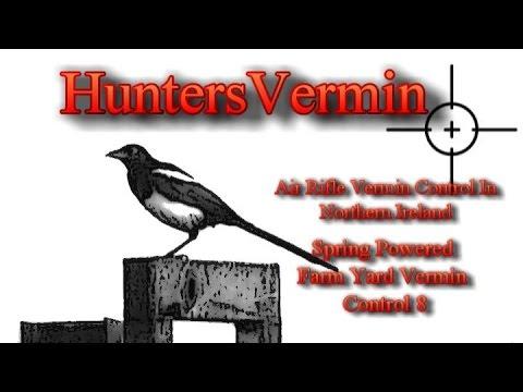 Air Rifle Hunting, Spring Powered Farm Yard Vermin Control 8