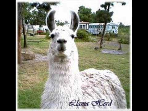 THE LLAMA SONG!!!!!!!!!!!, This is the llama song that my friend used to sing. Except this isn't her singing. dont own this song or the pictures
