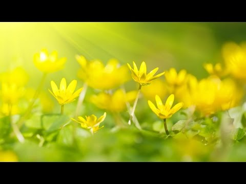 "Peaceful Music, Relaxing Music, Instrumental Music, ""Wonder Beyond Words"" by Tim Janis"