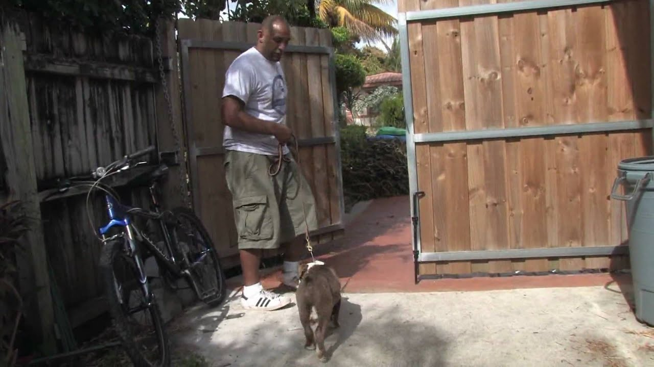 How To Train Dog To Stay In Yard Without Fence