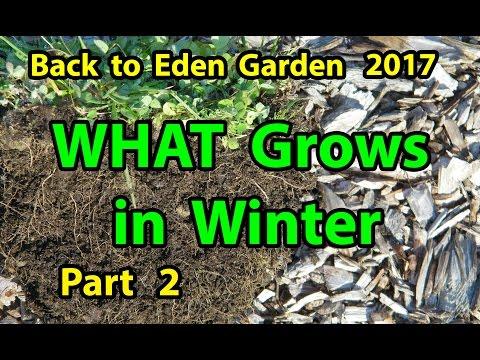 Back to Eden Organic Gardening Method 101 Soil Improvement with Wood Chips Garden Series  Part 2-