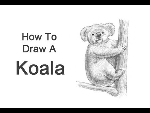 how to draw a realistic koala step by step