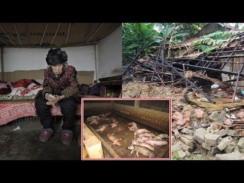 Mặc mẹ can ngăn, người con vẫn đập gian nhà cũ đi để xây chuồng lợn và nhận hậu quả đắng ngắt