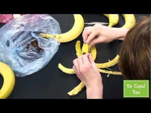 O caracatita si un catel din banane