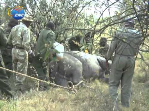 RHINO PROTECTION PROJECT IN KENYA