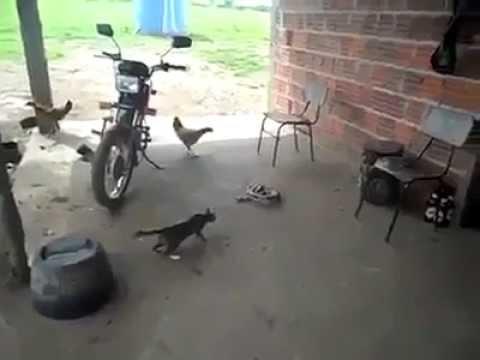 Mèo Tấn Công Rắn Và Cái Kết Cực Shock