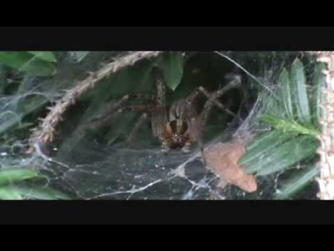 Spider Video Close Up