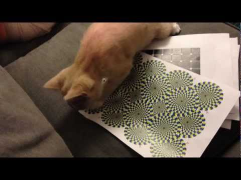 Kitten vs. Rotating Snakes Illusion