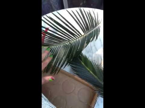Hojas d palmas para decorar youtube - Lamparas las palmas ...