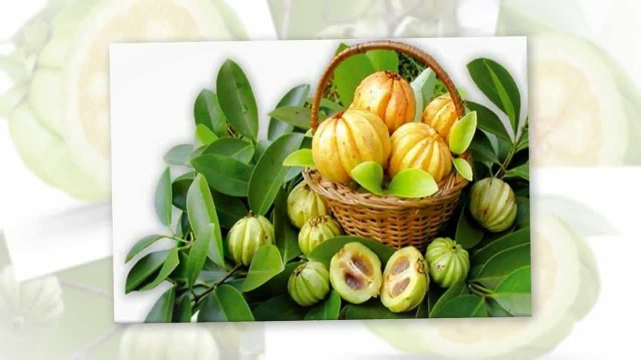Garcinia cambogia celebrity diet tips