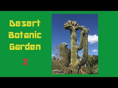 沙漠植物园2 你想不出仙人掌有多高