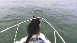Perro se lanza al agua con los delfines