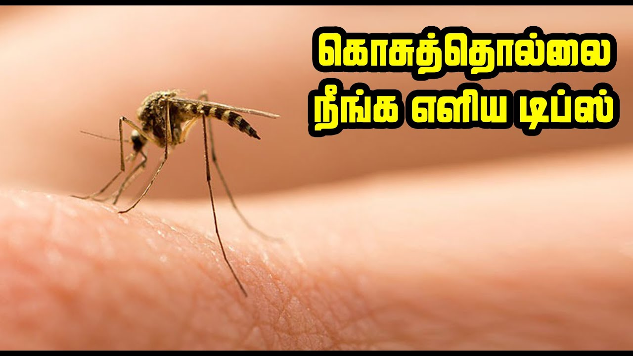 கொசுத்தொல்லை நீங்க எளிய டிப்ஸ் | How to get rid off from Mosquito | Easy Tips to Kill Mosquito