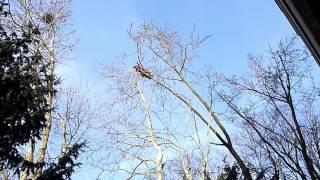 Video - Baumfällung