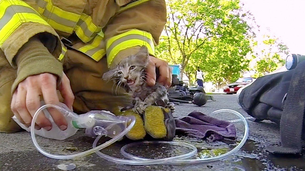 Un pompier sauve un chaton