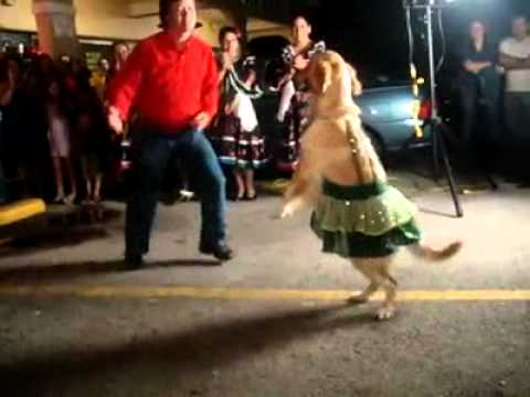 Dog does the merengue