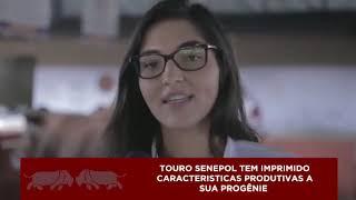 Senepol #ADICA – Ep. 16