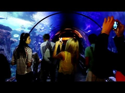 Shark Reef Aquarium at Mandalay Bay in Las Vegas