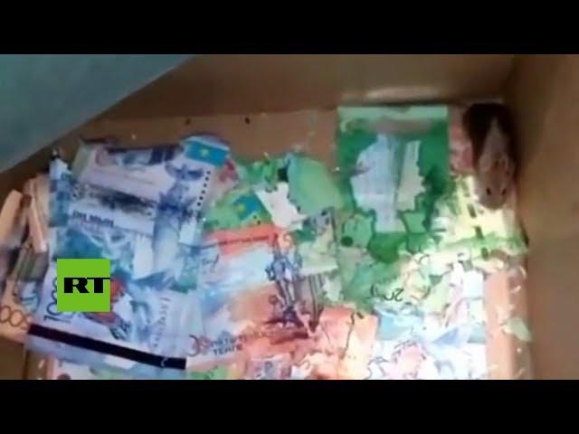 Cazan a una 'mafia' de ratones devorando billetes en un banco